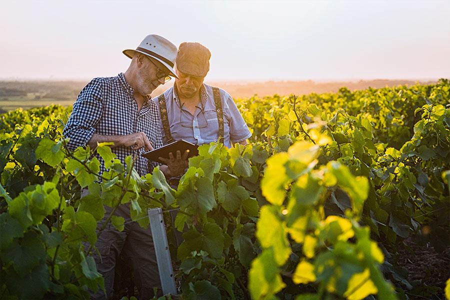 Dieses Bild zeigt zwei Berufstätige bei der Winzerarbeit.
